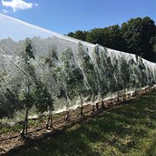 Démarrage d'un projet pour réduire l'utilisation des pesticides dans la production de fruits et de légumes